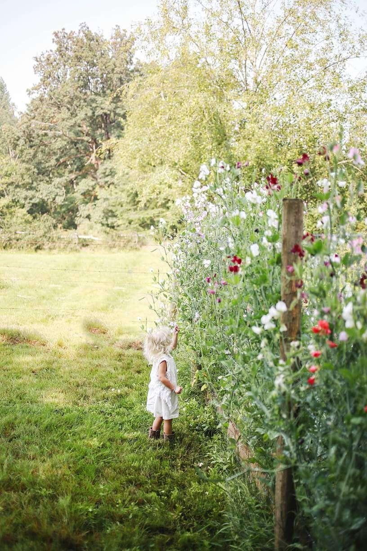 Backyard Garden ~ Fruits & Veggies ( PART 1)
